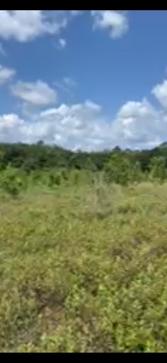20 ACRES IN SUWANNEE COUNTY FOR ONLY $110,000!!!!