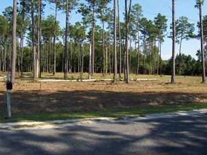 LAND FOR SALE IN PAMLICO COUNTY, NC