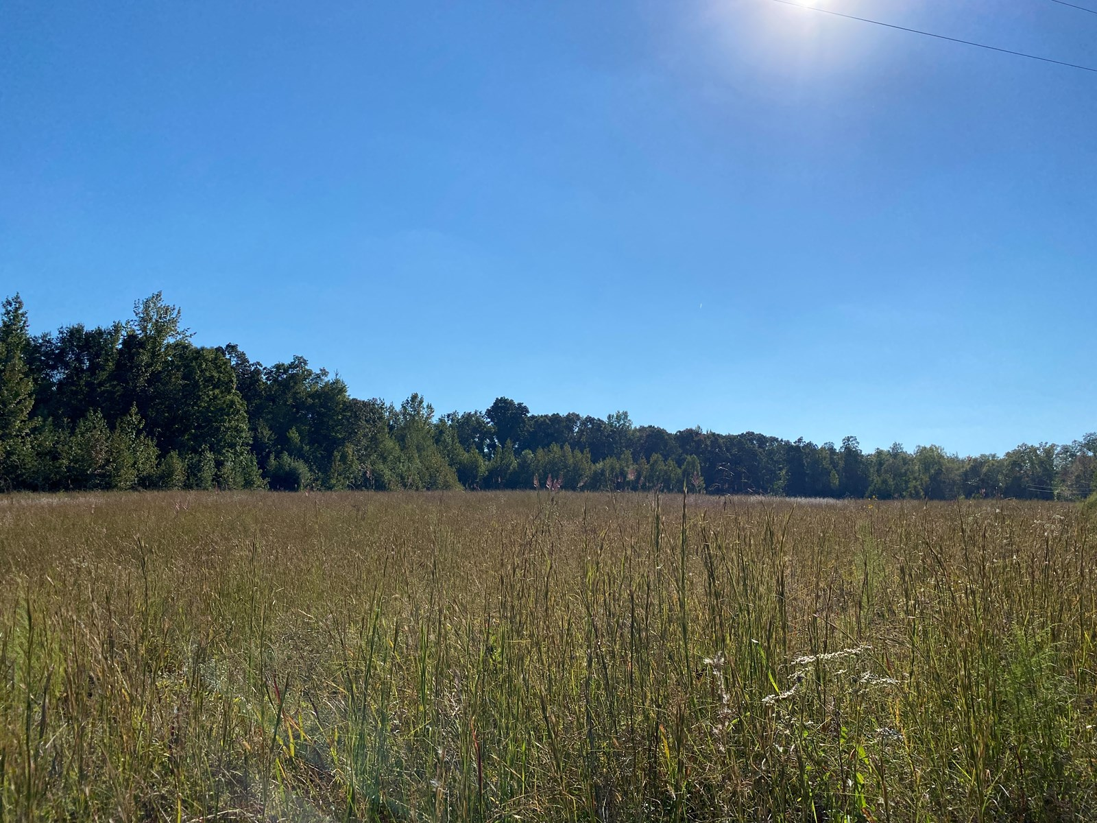 OPEN LAND FOR SALE IN TN, LEVEL LAND, PRIVATE SETTING