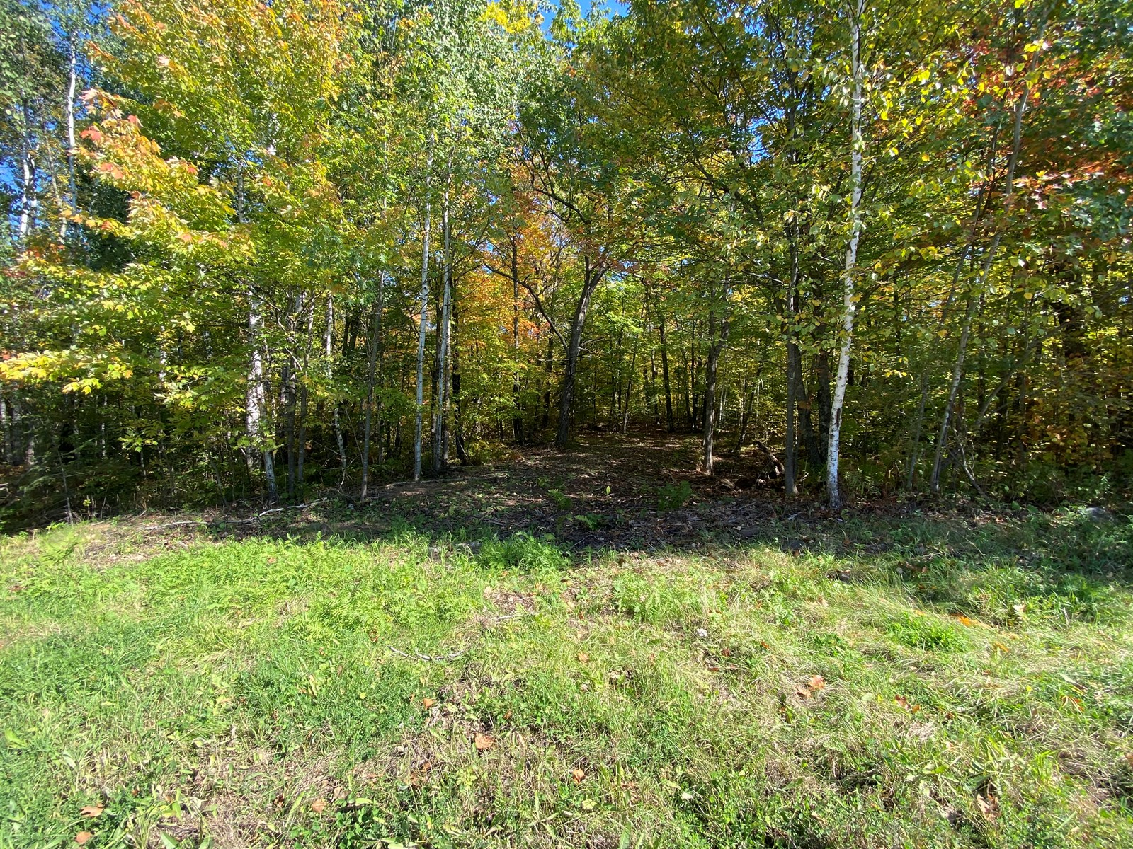 Wooded 7+ Acres Building Site For Sale In Holyoke Minnesota