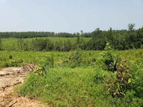 HUNTING LAND IN OUACHITA PARISH LOUISIANA FOR SALE