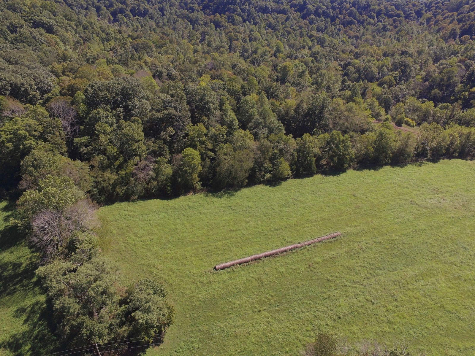 TRACT 4 - 22+/-ACRES - HUNTING - BLDG. SITES - LIBERTY, KY