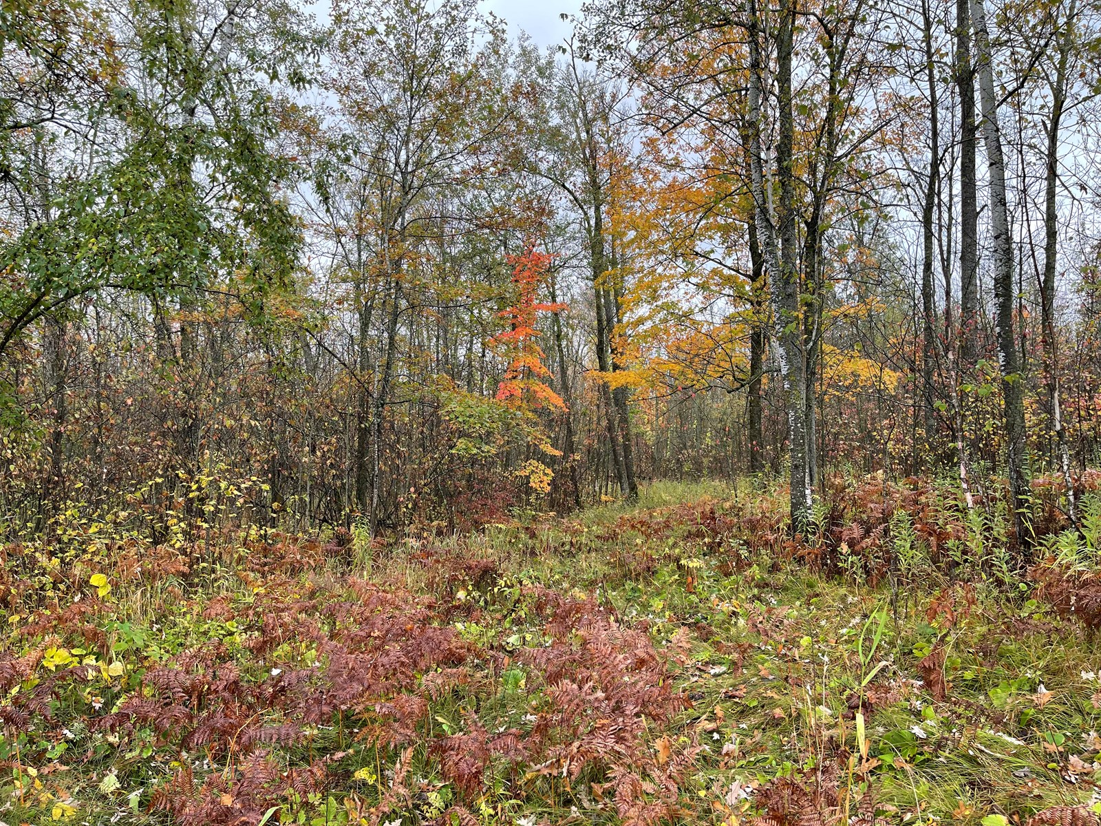 Wooded Acreage for Sale Bordering State Land Near Mille Lacs