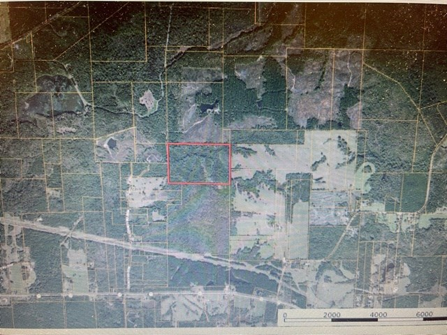 Northeast Texas Hunting Recreational, Timberland Property