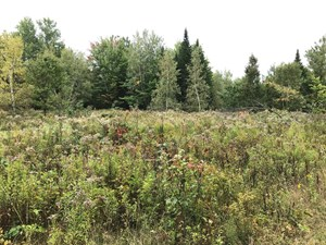 LAND FOR SALE IN MEDWAY, MAINE