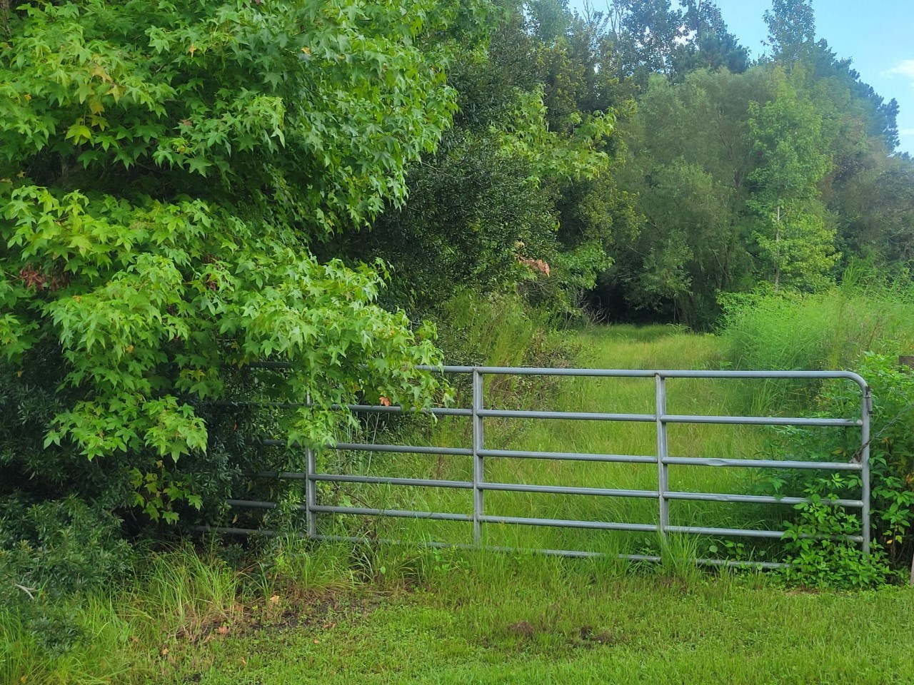 PRIVACY & SECLUSION ON BEAUTIFUL 5 ACRES IN LAKE BUTLER FL!