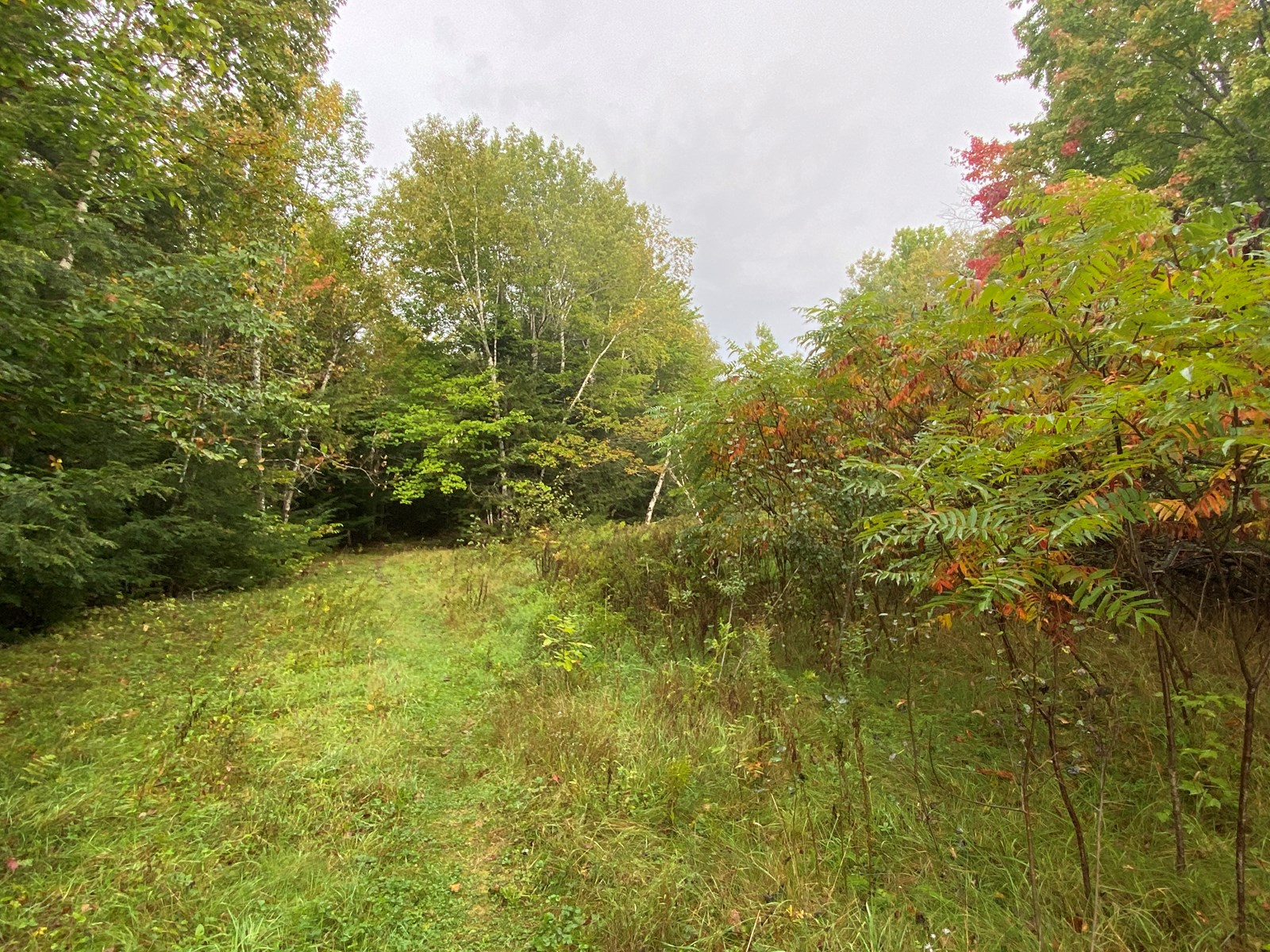 48 Acres Land for Sale Old Town Maine