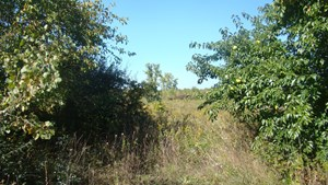 VACANT LAND IN BLUEBERRY COUNTRY FOR SALE IN COVERT, MI!