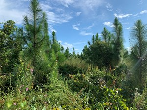 HUNTING LAND IN GADSDEN COUNTY, FLORIDA FOR SALE