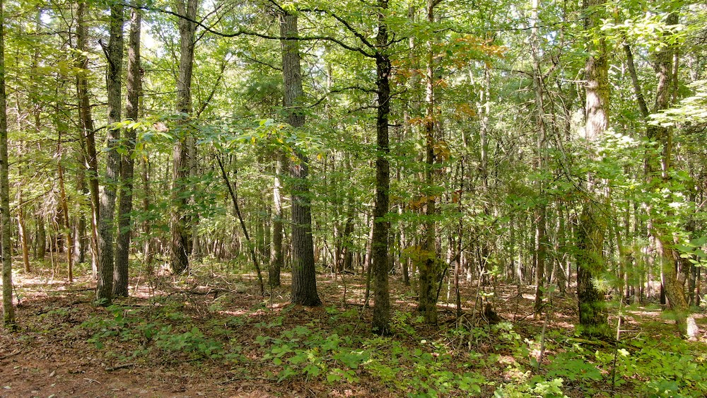 Wooded Lot for Sale in Check VA!