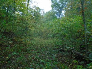SECLUDED HUNTING LAND IN MISSOURI
