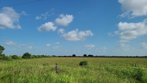 5 ACRE LOTS FOR SALE IN WINNIE TEXAS
