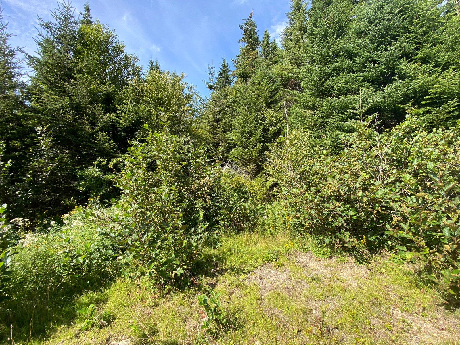 Land for sale in Cutler, Maine