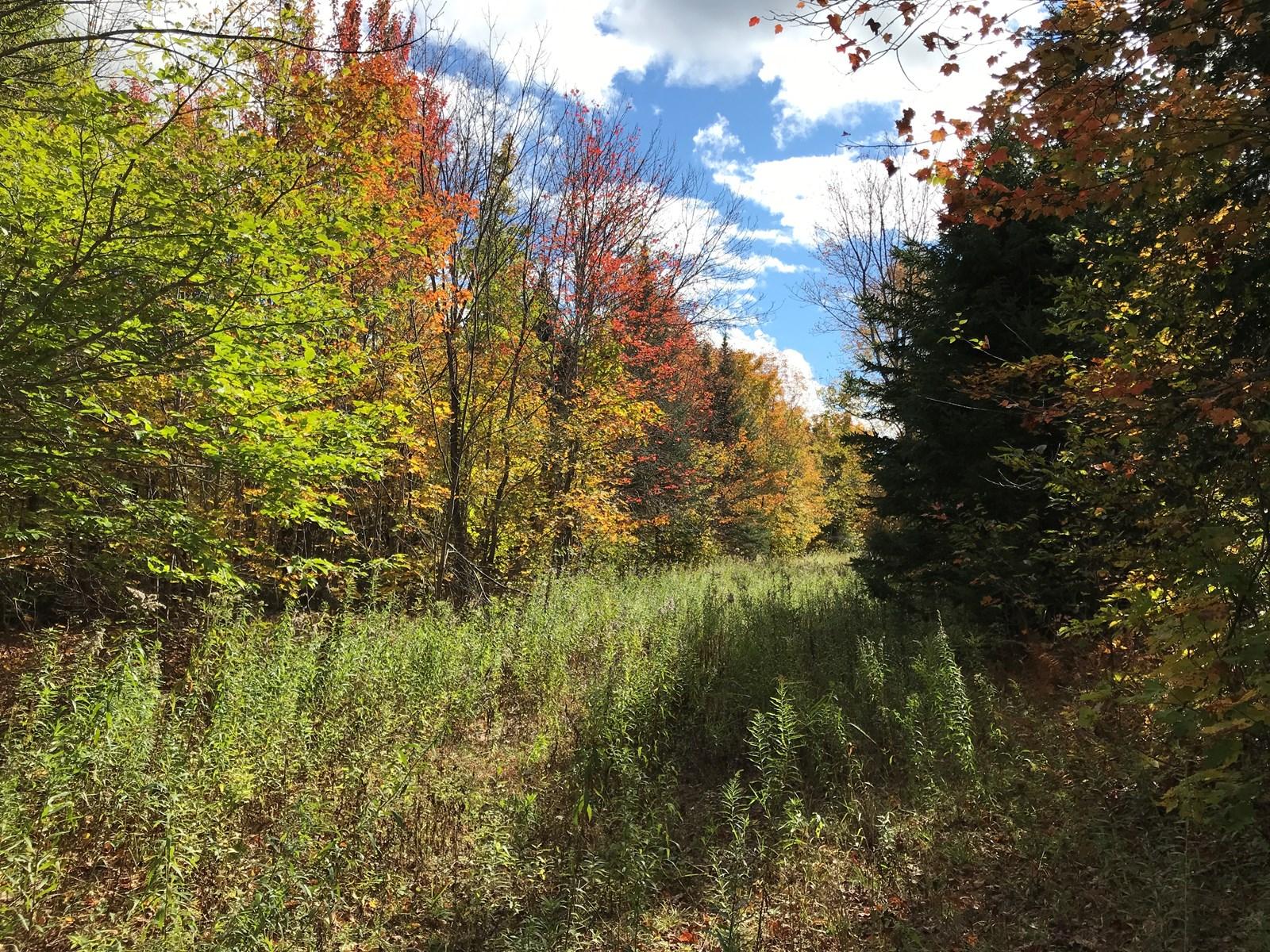 Webber Road Off-Grid Cabin Site