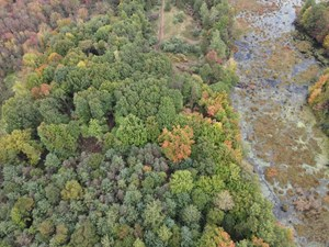 HUNTING LAND FOR SALE IN MICHIGAN-43 ACRES IN MONTCALM COUNT