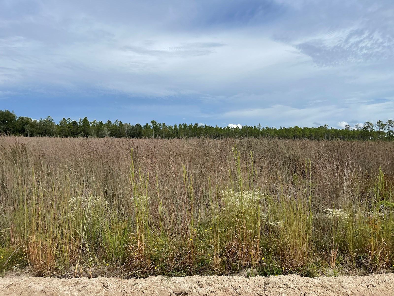 28 ACRES WITH PLANTED PINES FOR SALE IN COLUMBIA COUNTY FL