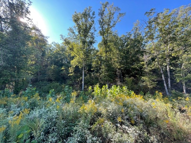 Southern Missouri Land for Sale