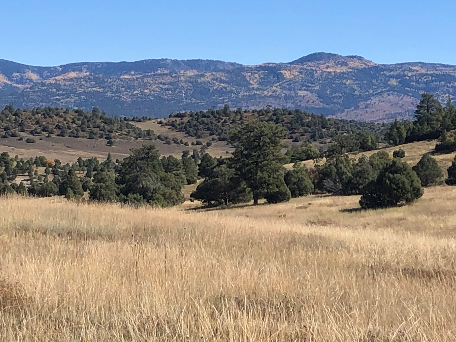 Gorgeous Northern New Mexico Farm with Well, Septic, Power