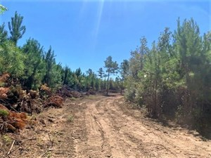 145 ACRES HUNTING LAND FOR SALE IN SW MS