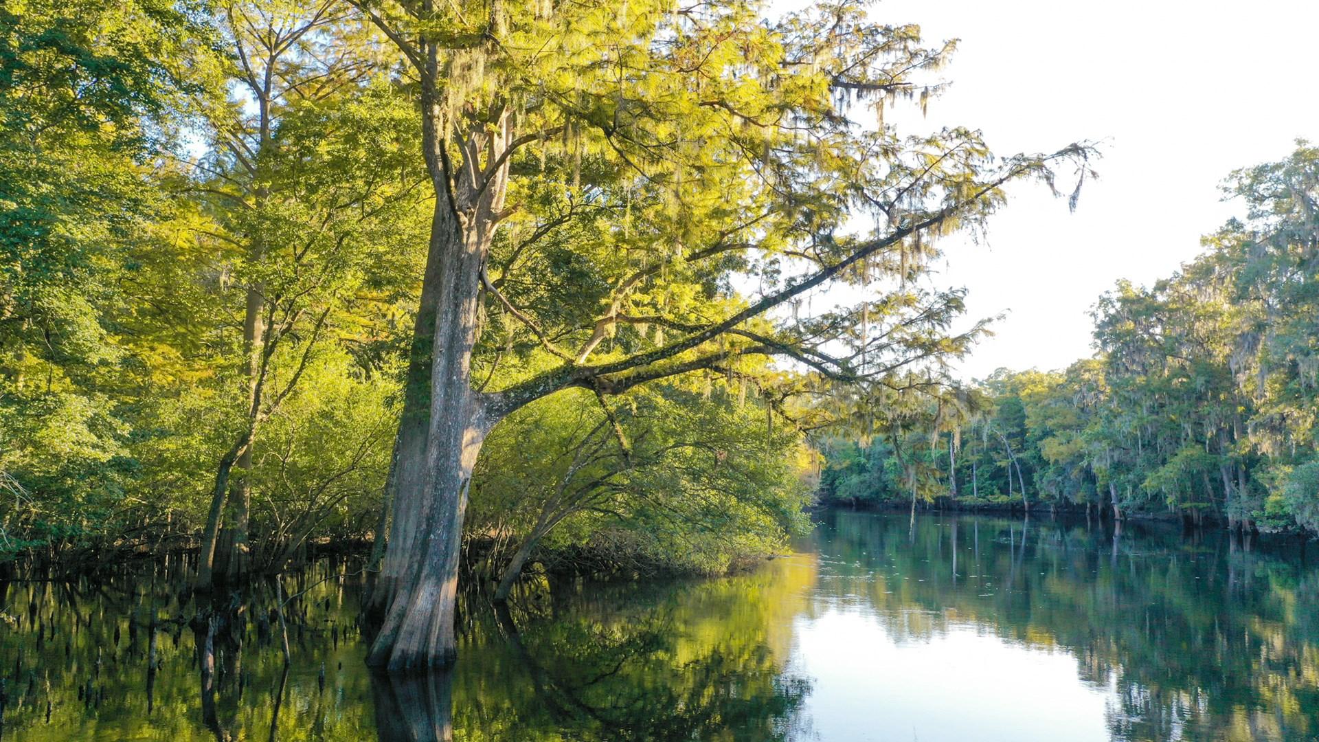 Build your Santa Fe River Nature Retreat