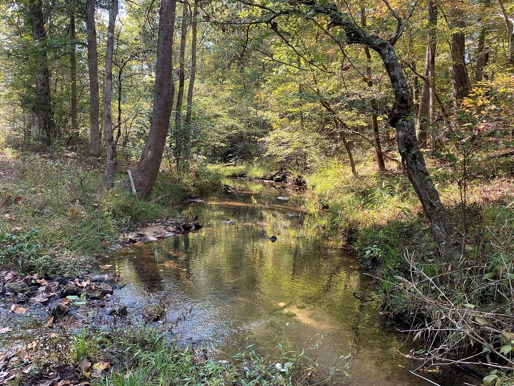 ARKANSAS HUNTING ACREAGE WITH LIVE WATER
