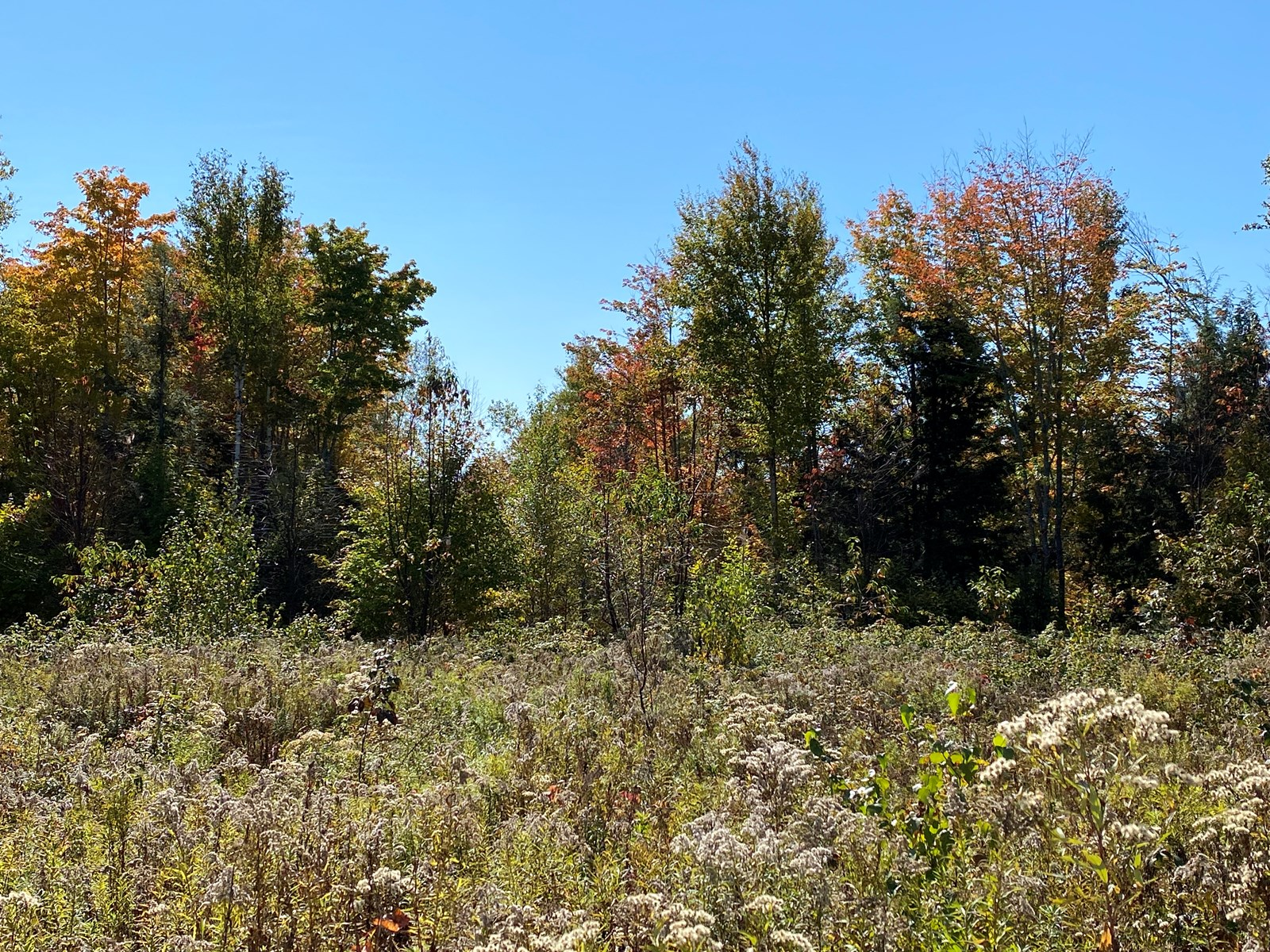 234± acres Maine Land for Sale