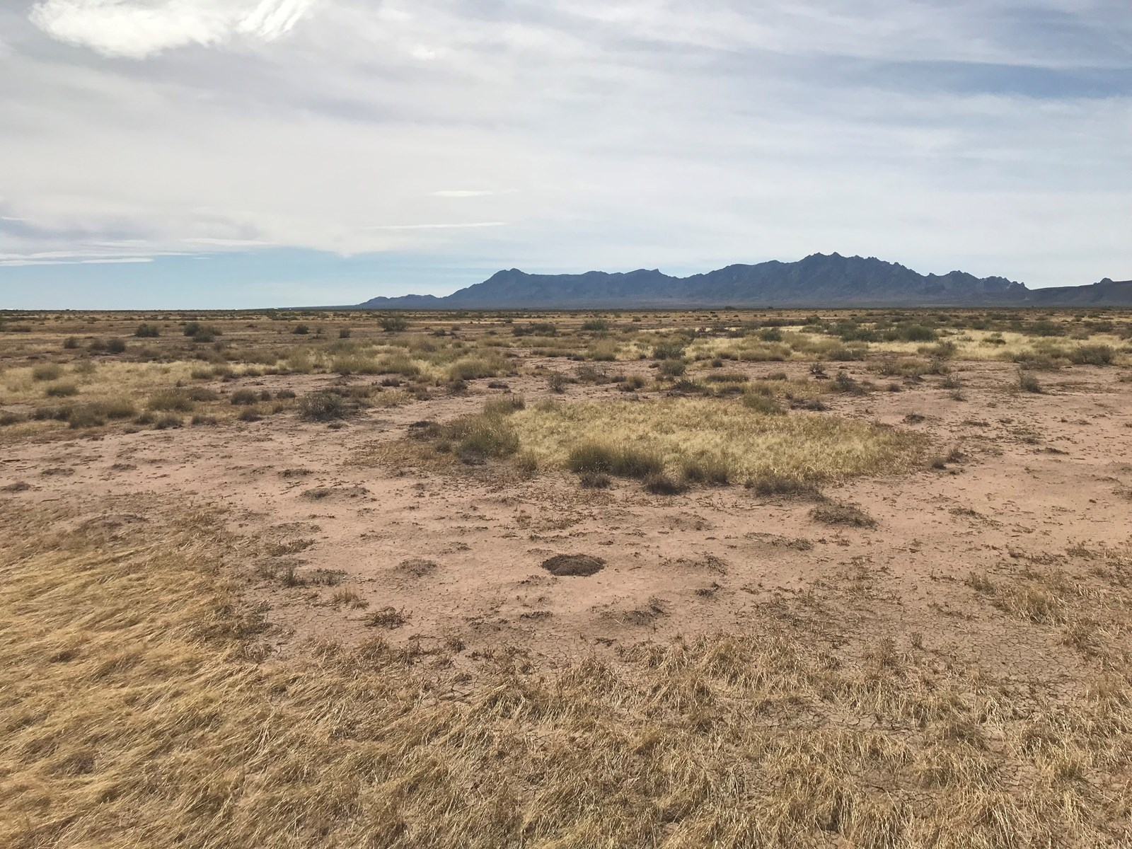 Land for Sale in Deming New Mexico