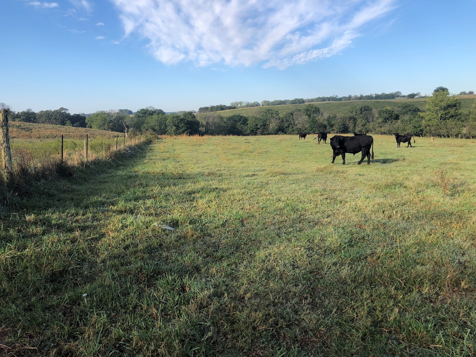 Southern Missouri Farm for Sale - Grazing, Hunting, Cattle