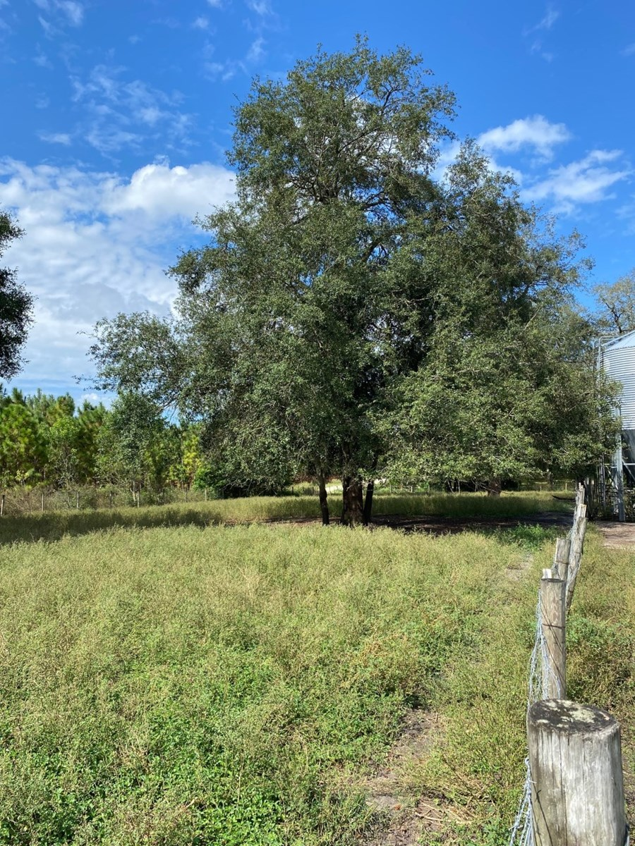 PERFECT SMALL RANCH ON 10 ACRES FOR ONLY $125,000!!!!