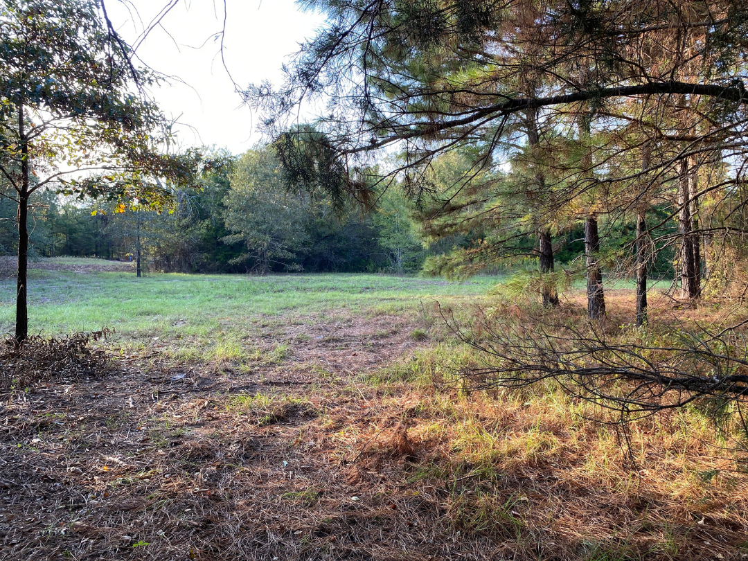 32 acres ± for sale in Gilmer, Texas