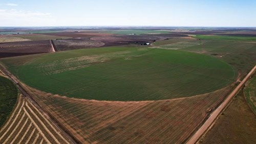 Texas Irrigated Farm for Sale Castro County