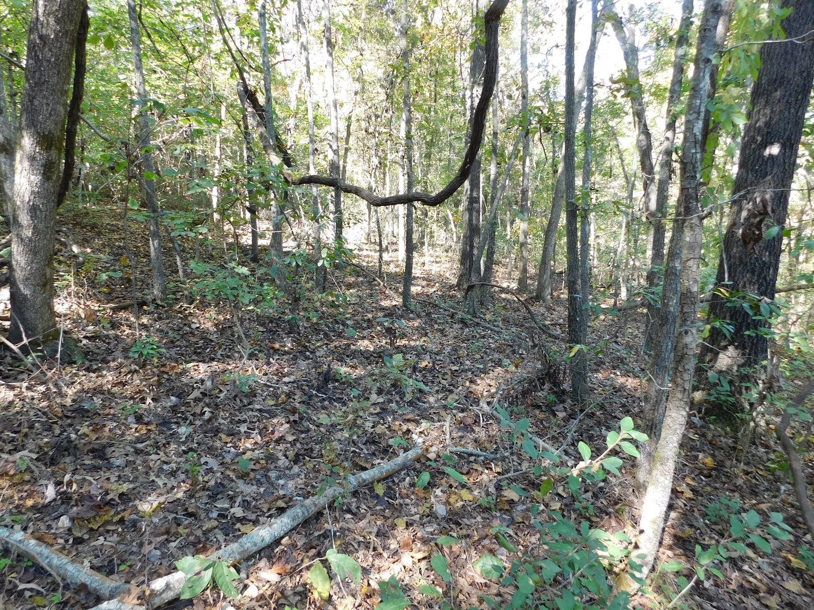 Building Site Land Newton County For Sale