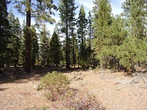3.68 ACRES OFF THE GRID IN MODOC COUNTY