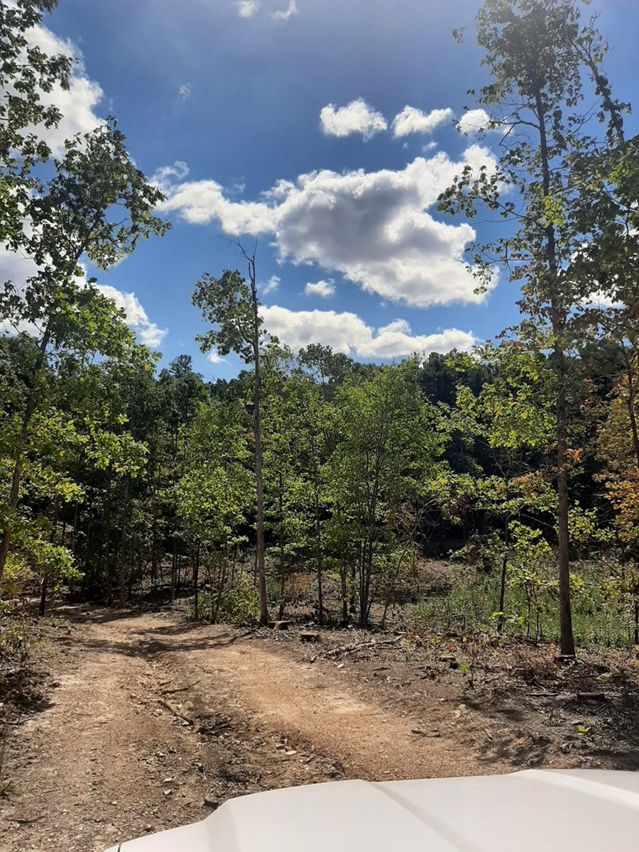 Timberland in the Heart of the Ozarks, 126 Acres for Sale