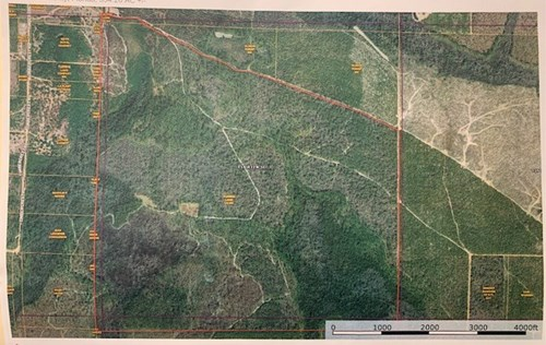 Hunting Land in Bay County For Sale