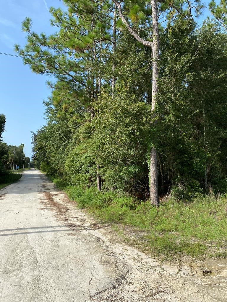 32 beautiful, peaceful, wooded LOTS near Suwannee River!