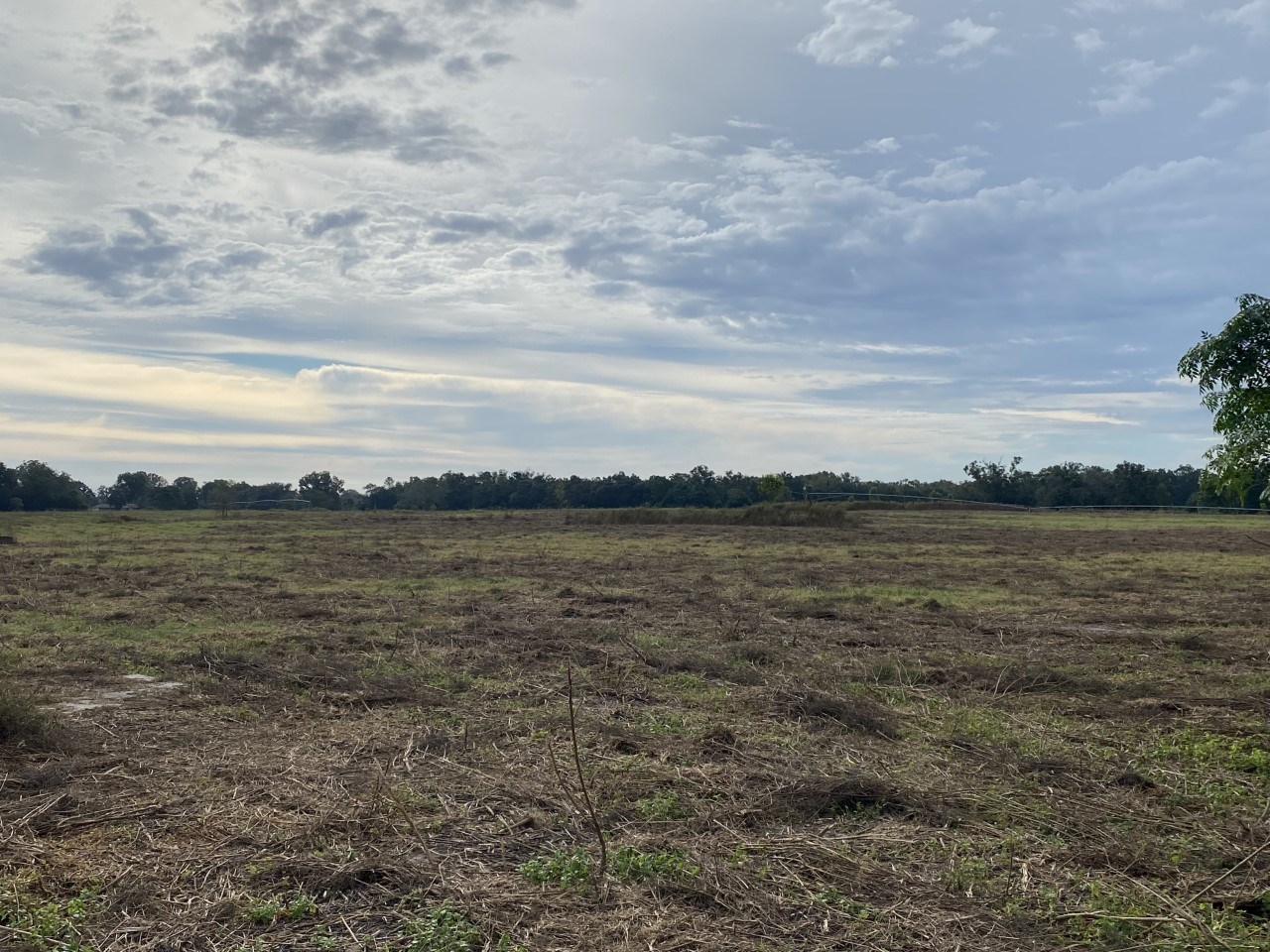 20 ACRE PASTURE FARMLAND FOR ONLY $160,000!!!!