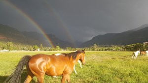 OURAY, CO GUIDED TRAIL RIDES BUSINESS *NO DEEDED PROPERTY*