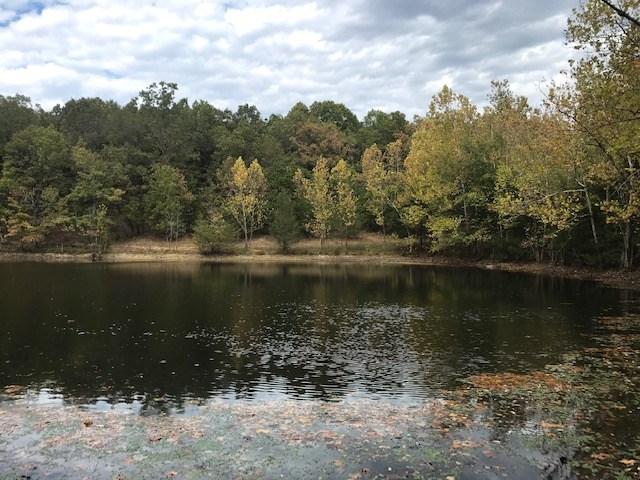 Large Acreage Timber Pasture Land For Sale Bull Shoals Lake