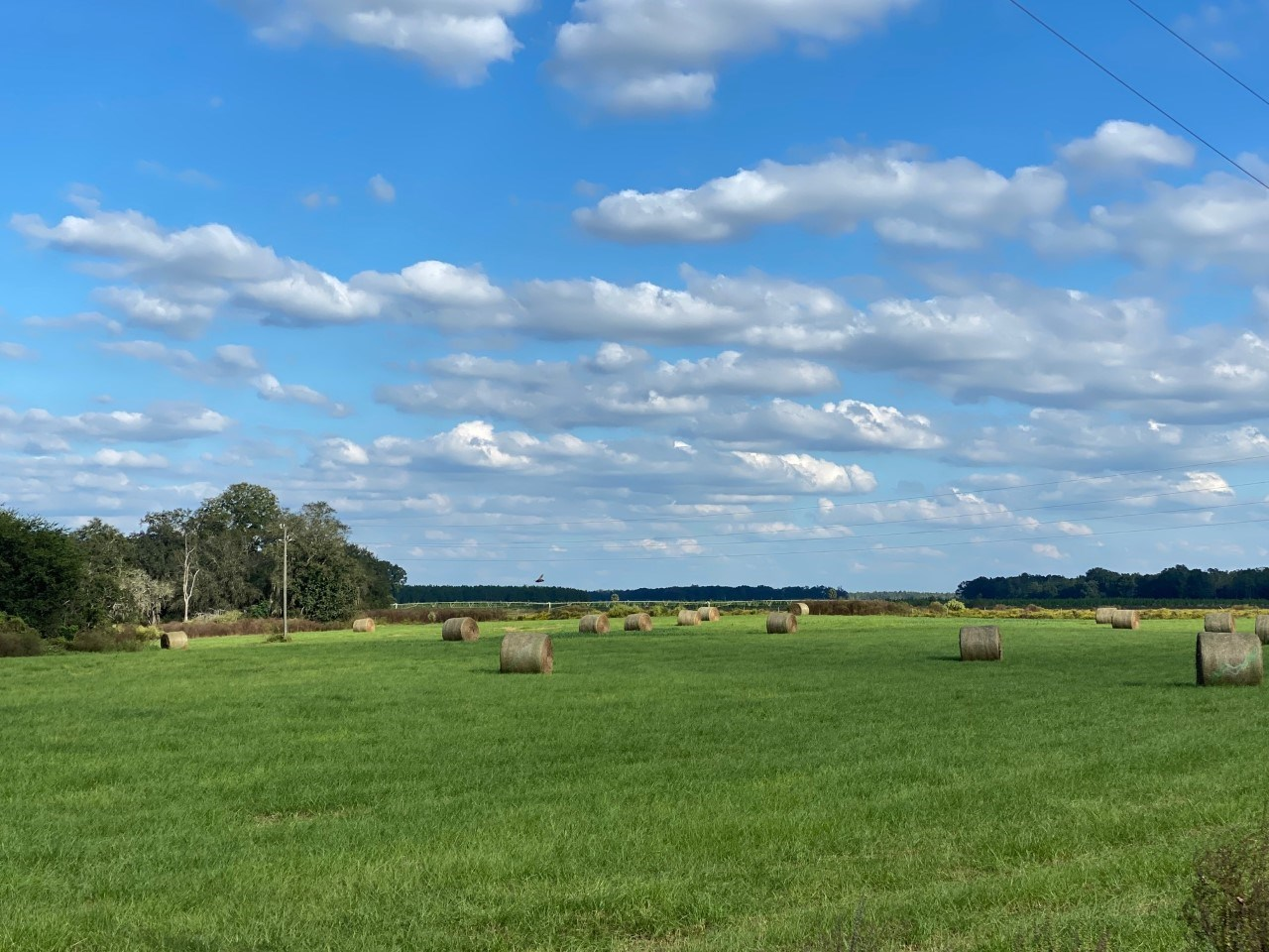PASTURE AND PIVOT IRRIGATED LAND HIGHWAY FRONTAGE $936,000!