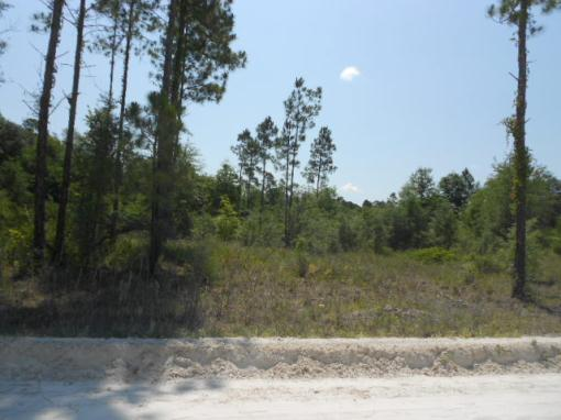 North Central Fl 41 Acres Of Planted Pines & Oaks