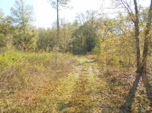 North Central Florida 2 Acre Buildable Homesite