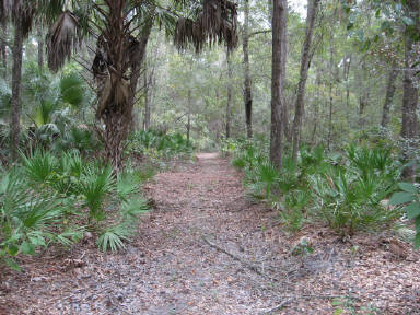 North Central Chiefland Florida Acreage For Sale (4.4 Acres)