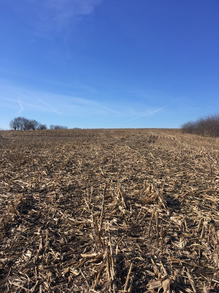 Caldwell County Land For Sale 120 +/- Total 90 +/- Row Crop
