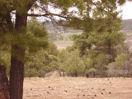 Nice Building Lot With Trees And Privacy