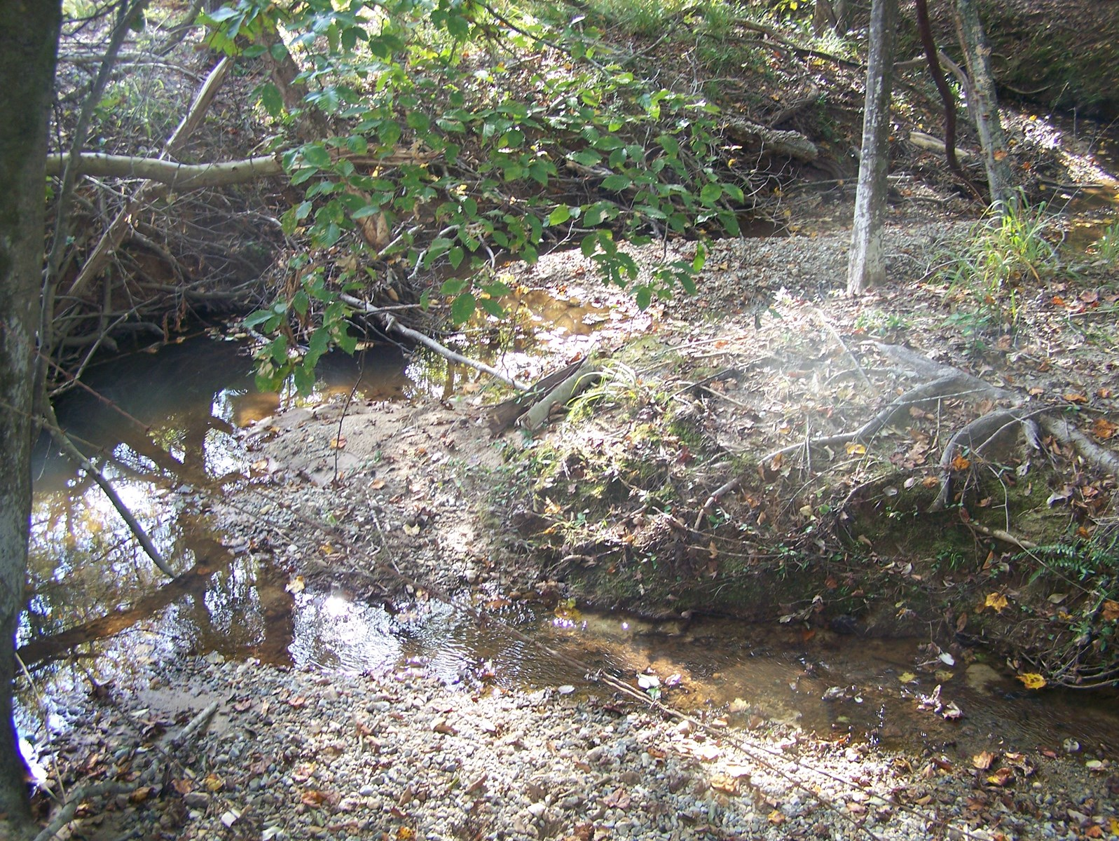 RIDGEWAY, SC 6.96 ACRE HOME SITE W/CREEK FRONTAGE