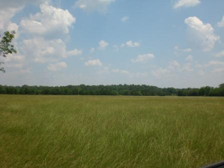 Great 50 Acres In Shelbyville, Tn!!