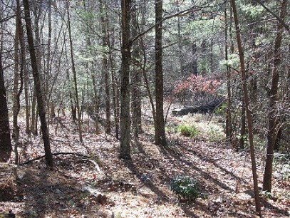 Prime Mountain Estates Building Lot!