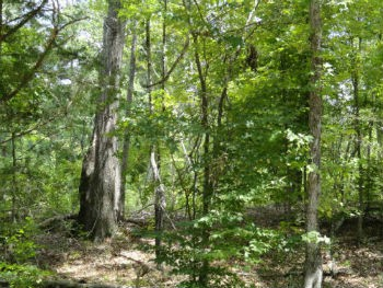 Land, Scattered Trees, Building Spot Creeks