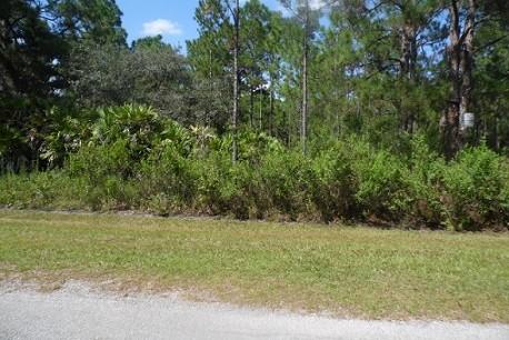 1/2 Acre Central Florida